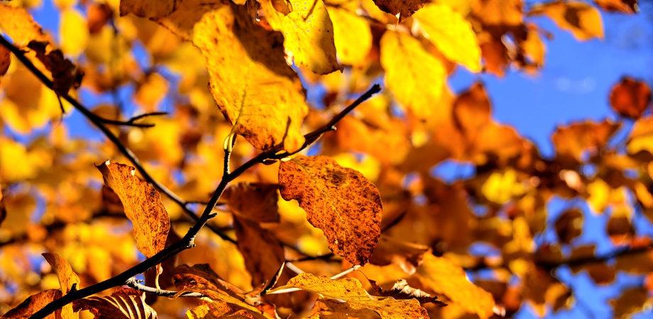 Jesień na polskiej działce to czas porządków